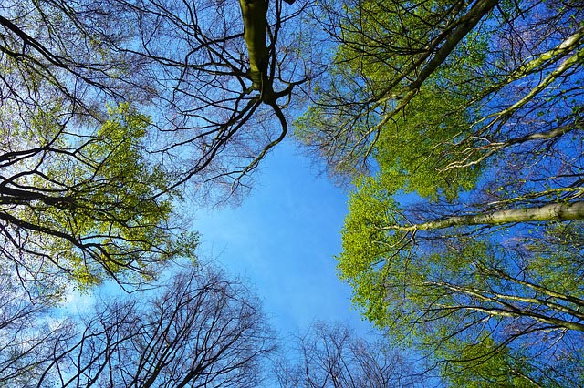 BASK to provide free trees in celebration of National Arbor Day